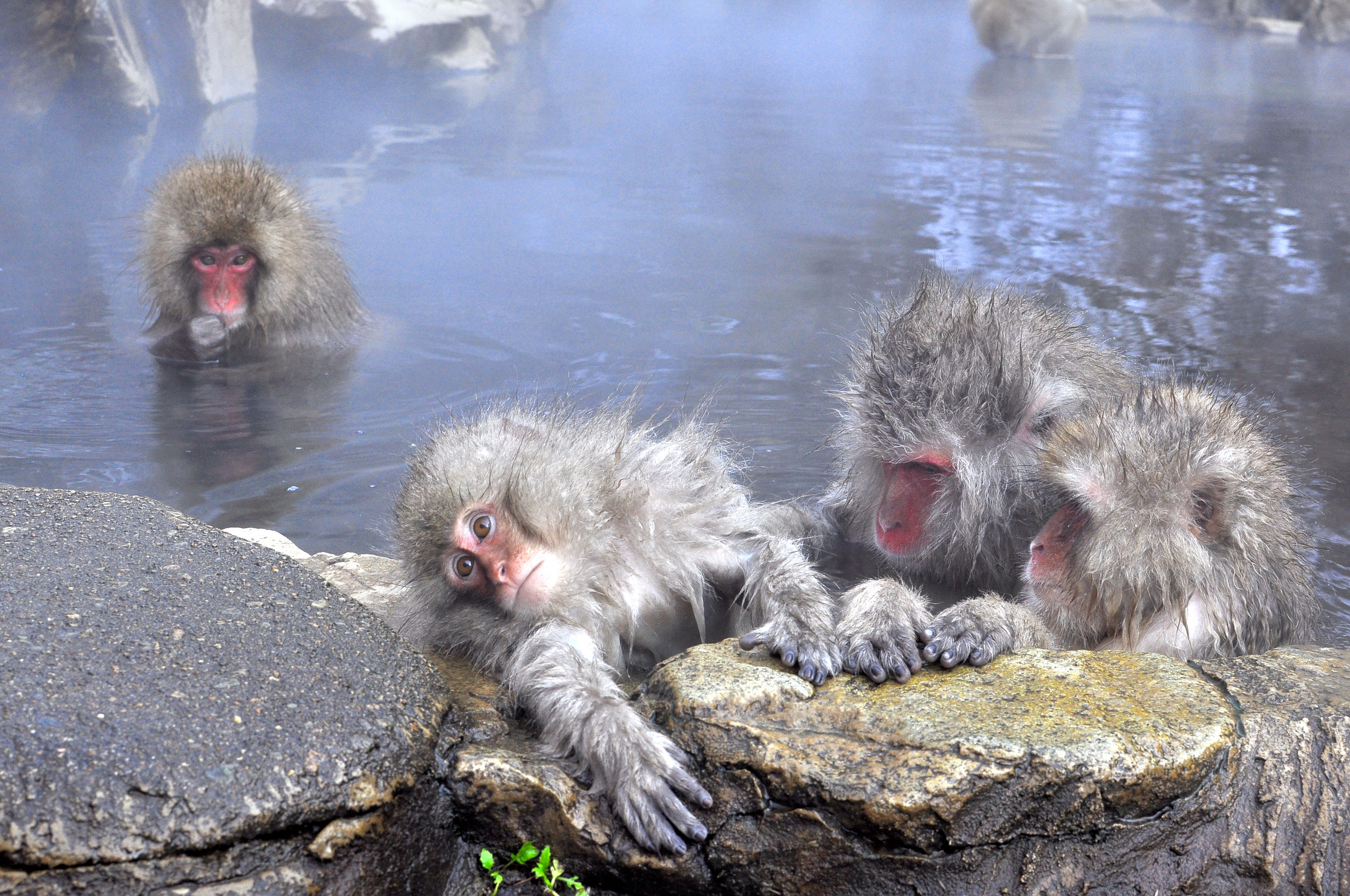 What Not to Do While Visiting an Onsen | Hey from Japan- or wherever ...
